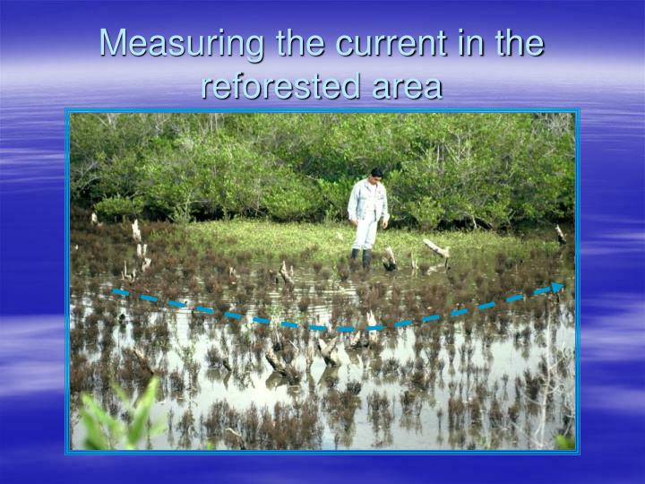 Measuring the current in the reforested area