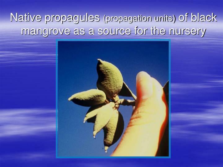 Native propagules