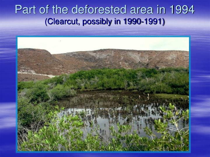 Part of the deforested area in 1994
