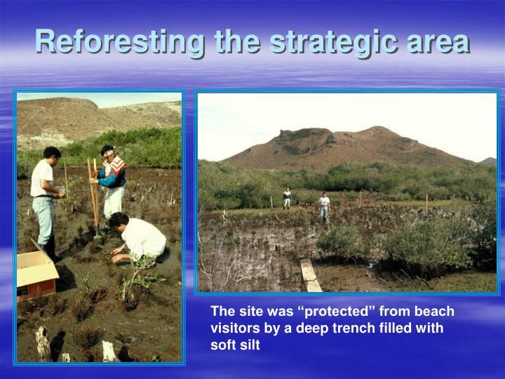 Reforesting the strategic area