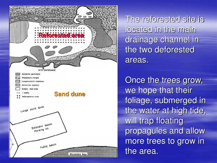 The reforested site is located in the main drainage channel in the two deforested areas.