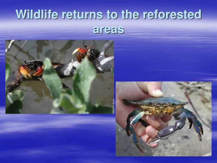Wildlife returns to the reforested areas
