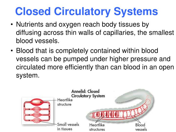 what is a closed circulatory system