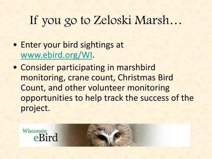 If you go to Zeloski Marsh…