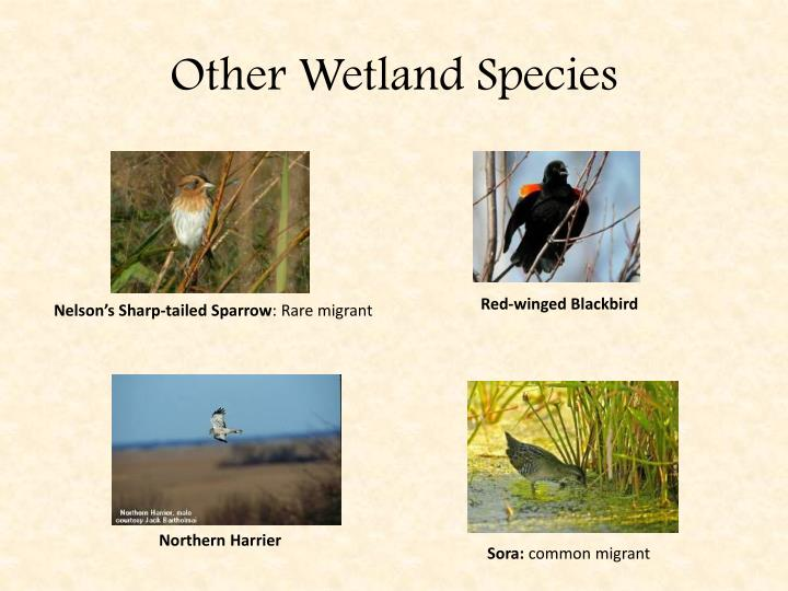 Other Wetland Species