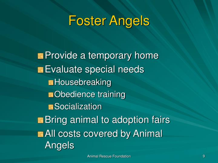 Foster Angels