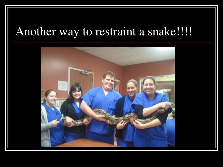 Another way to restraint a snake!!!!