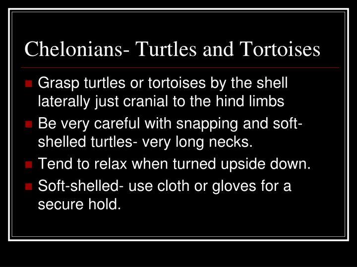 Chelonians- Turtles and Tortoises