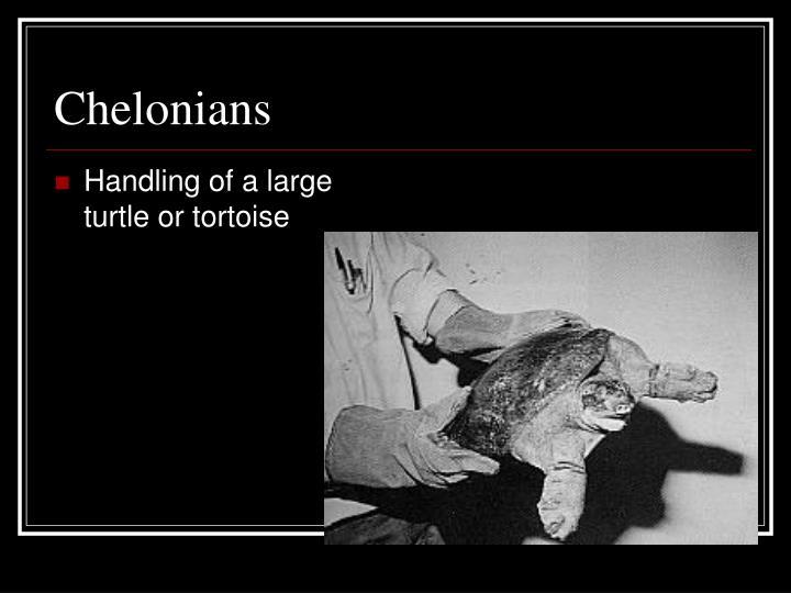 Chelonians