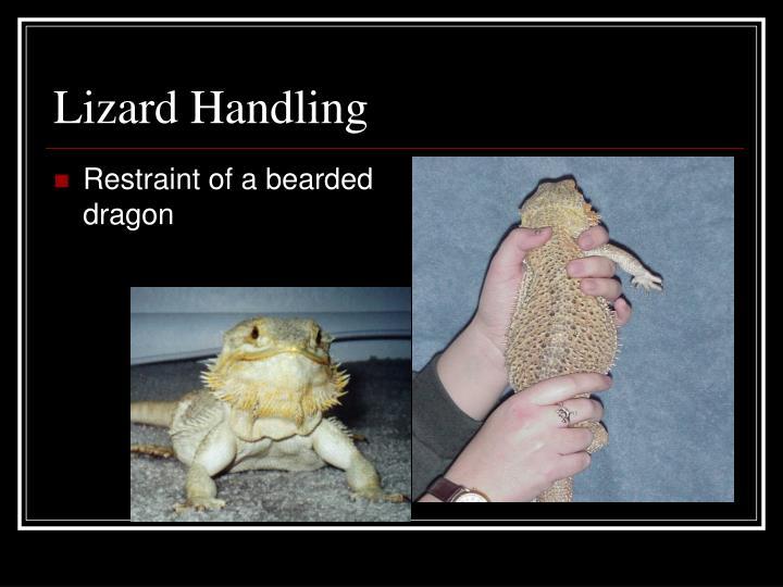Lizard Handling