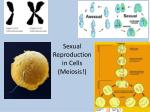 sexual reproduction in cells meiosis