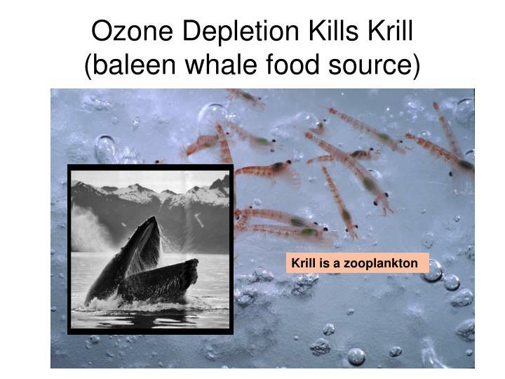 Ozone Depletion Kills Krill