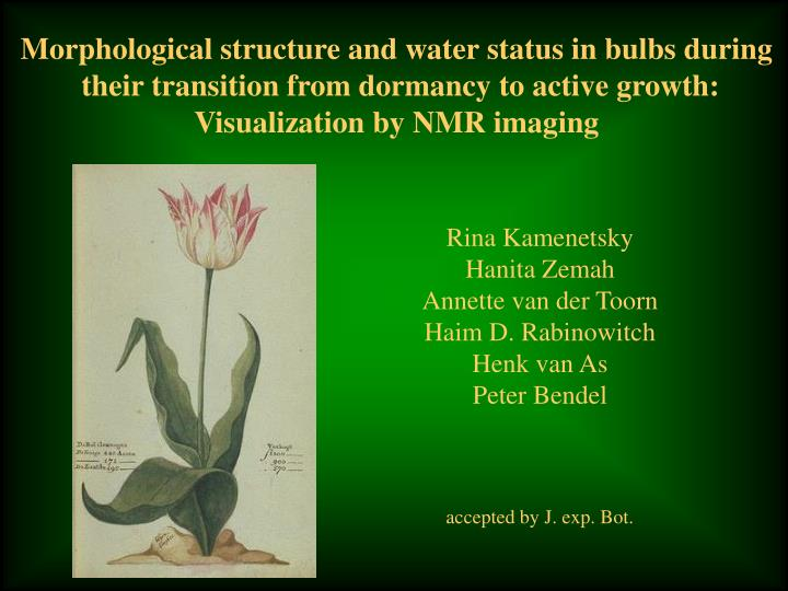 Morphological structure and water status in bulbs during