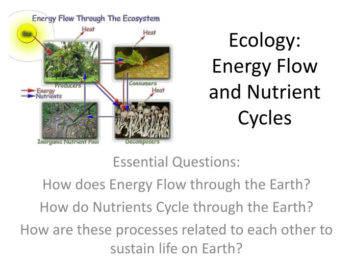 ecology essential questions Start studying introduction to ecology practice test learn vocabulary, terms, and more with flashcards, games, and other study tools.