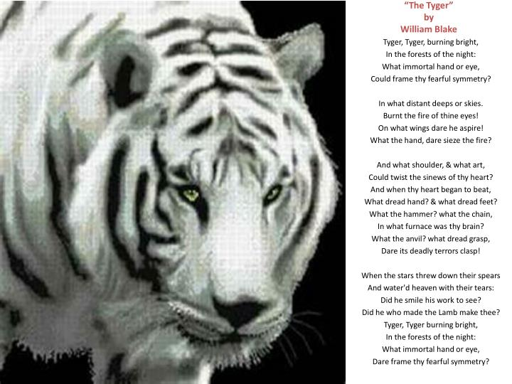 tyger as evil in william blakes Tyger burning bright in the forests of the night, what immortal hand or eye could frame thy fearful symmetry in what distant deeps or skies burnt the initial reaction: the tiger is a dreadful and deadly that creates fear in the narrator the narrator is questioning the evil of the tiger and who created this.
