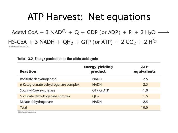 ATP Harvest:  Net equations