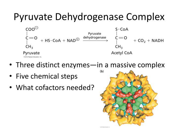 Pyruvate Dehydrogenase Complex