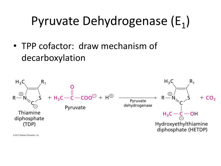 Pyruvate Dehydrogenase (E
