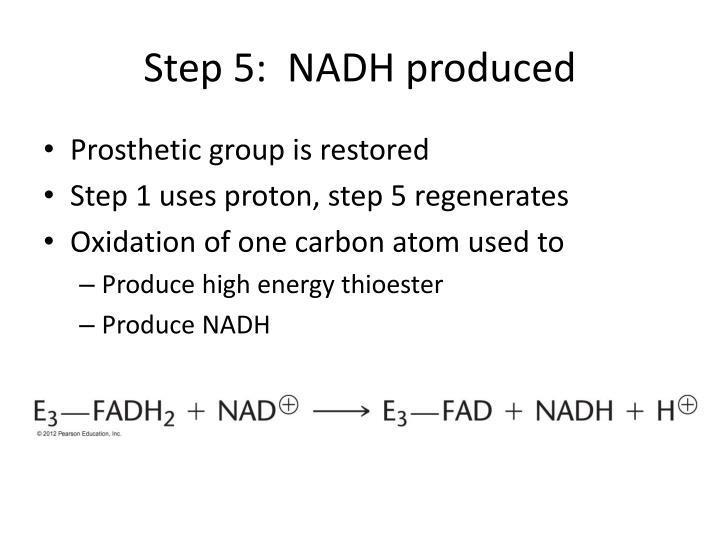 Step 5:  NADH produced