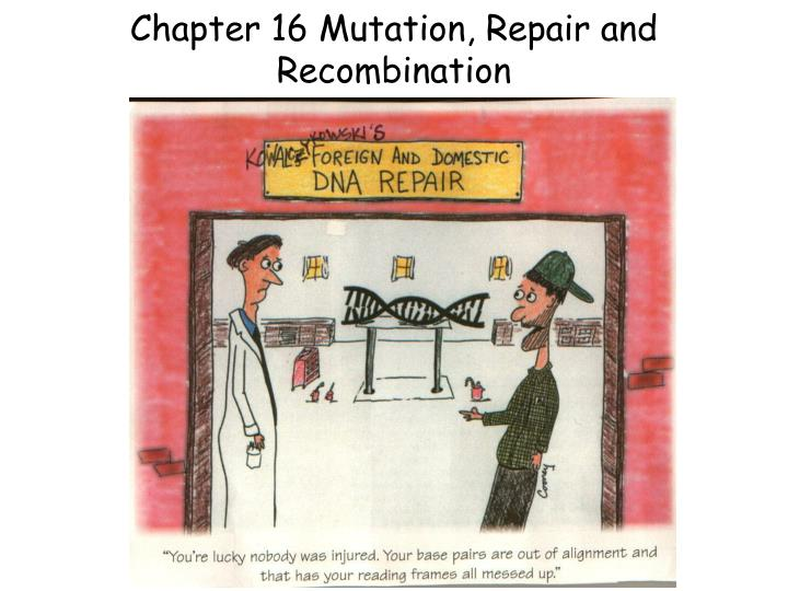 chapter 16 mutation repair and recombination