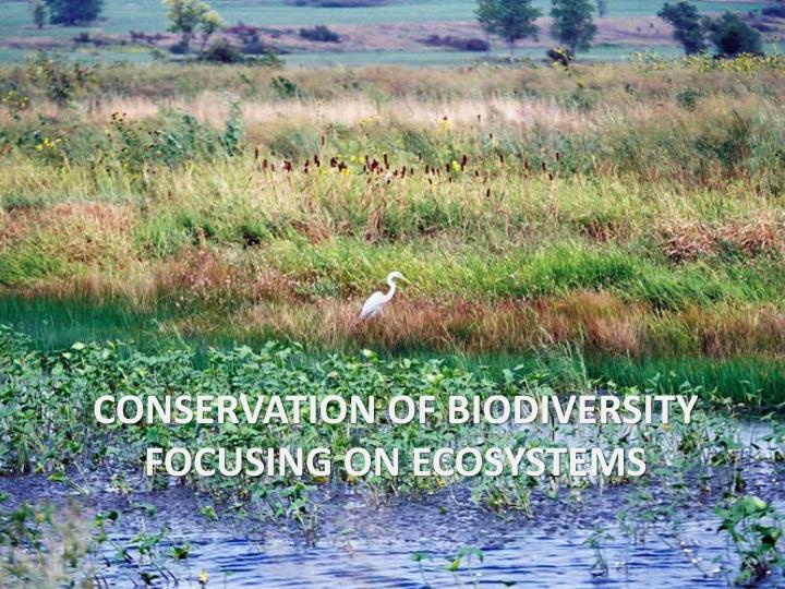 Conservation of biodiversity focusing on