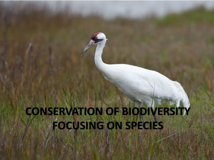Conservation of biodiversity focusing on species