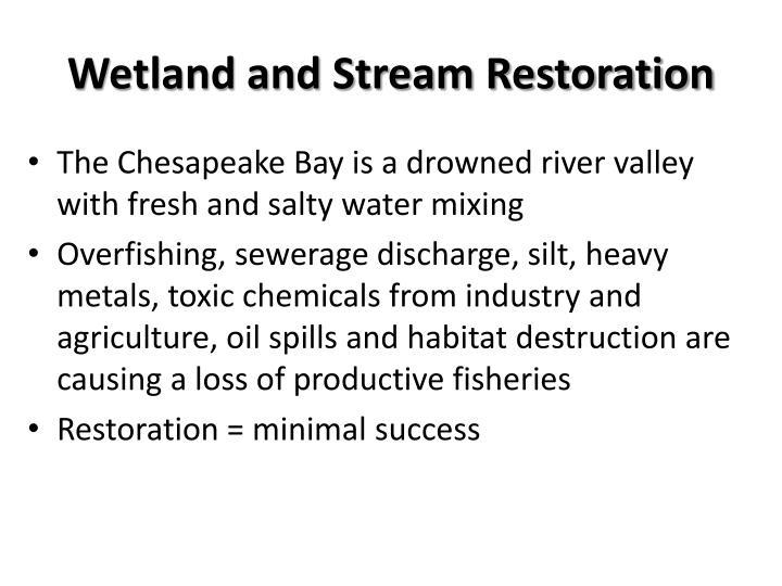 Wetland and Stream Restoration