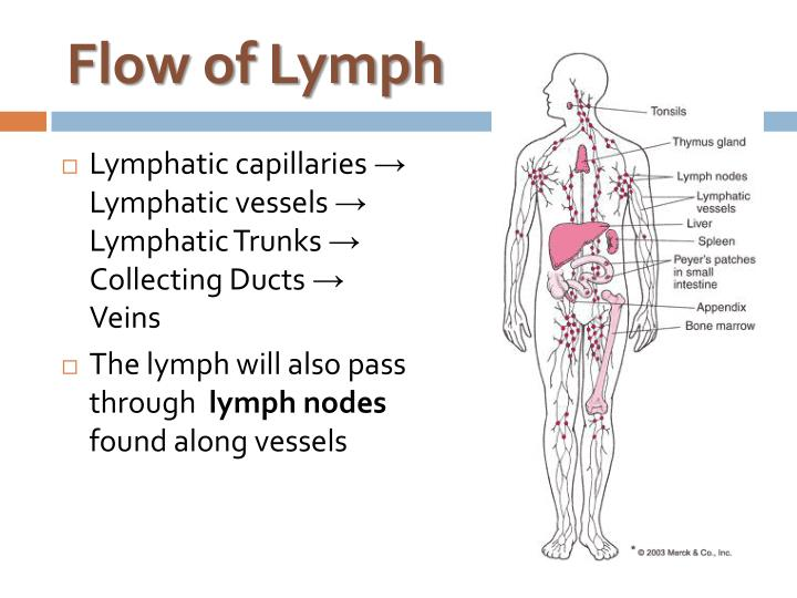Ppt Lymphatic Immune System Powerpoint Presentation Id6529316