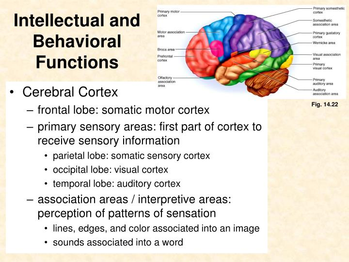 Ppt Intellectual And Behavioral Functions Powerpoint Presentation