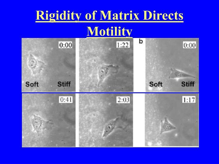 Rigidity of Matrix Directs Motility