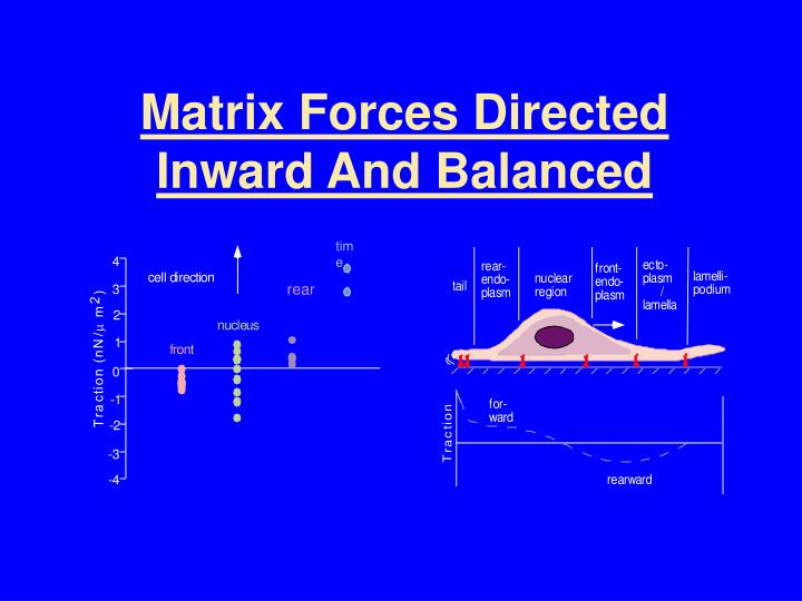 Matrix Forces Directed