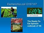 escherichia coli o157 h7