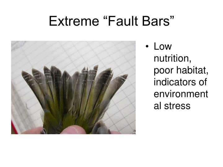 "Extreme ""Fault Bars"""