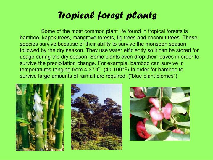 Tropical forest plants