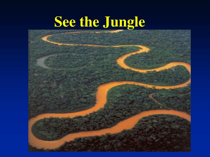 See the Jungle