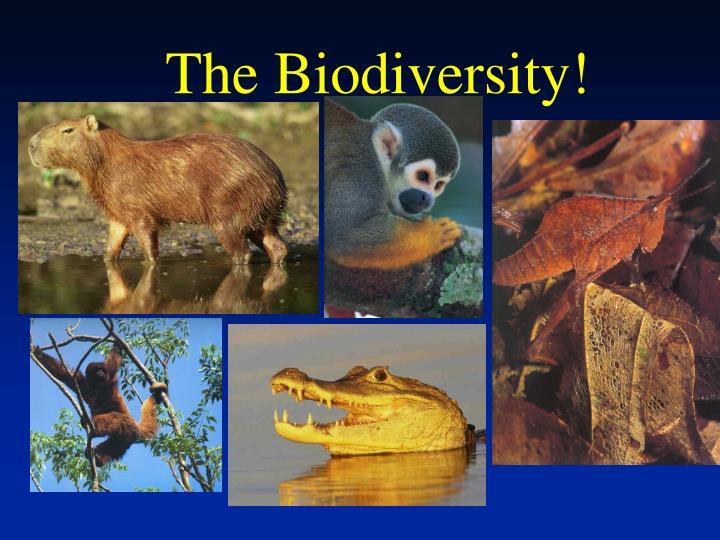The Biodiversity!