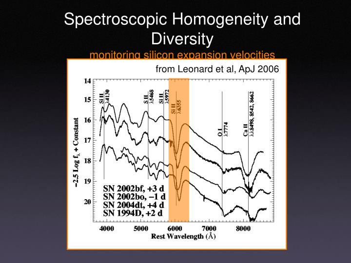 Spectroscopic Homogeneity and Diversity