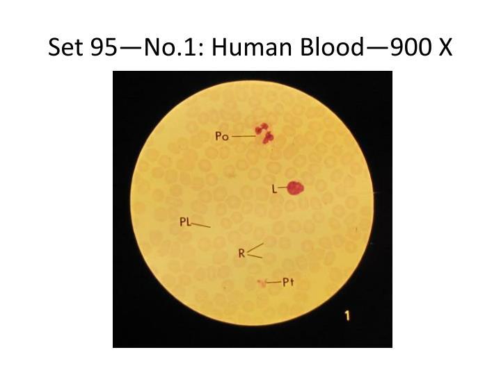 Set 95—No.1: Human Blood—900 X