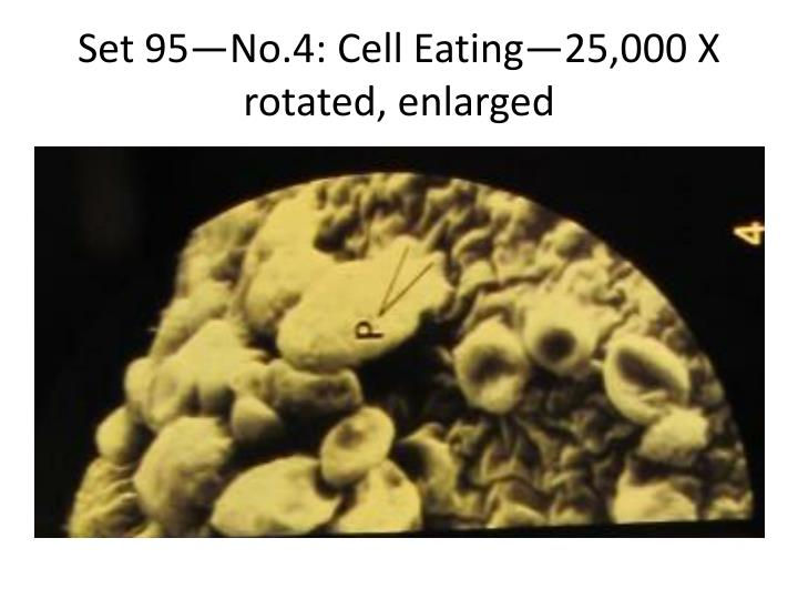 Set 95—No.4: Cell Eating—25,000 X