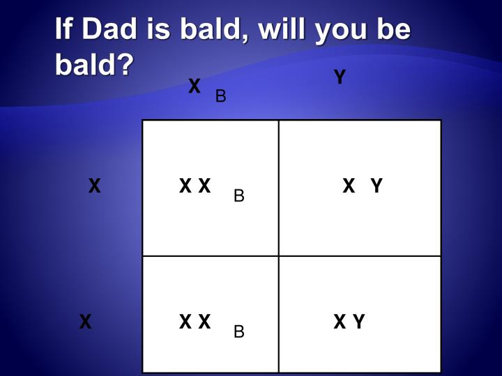 If Dad is bald, will you be bald?