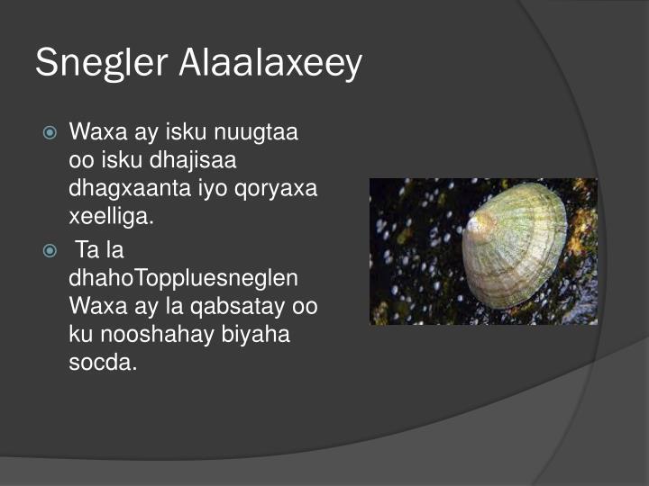 Snegler Alaalaxeey