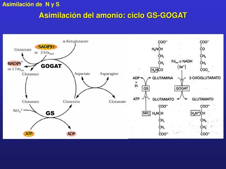 Mejor medicina para funciones del metabolismo