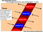 gas exchange occurs