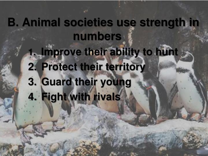 B. Animal societies use strength in numbers
