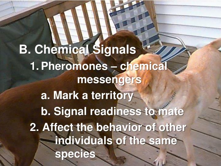 B. Chemical Signals