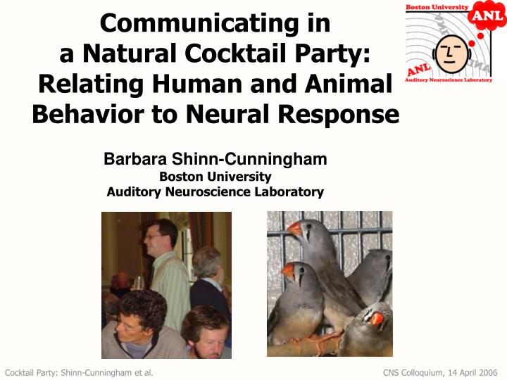 communicating in a natural cocktail party relating human and animal behavior to neural response n.
