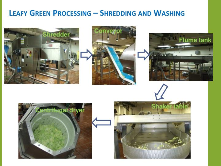 Leafy Green Processing – Shredding and Washing