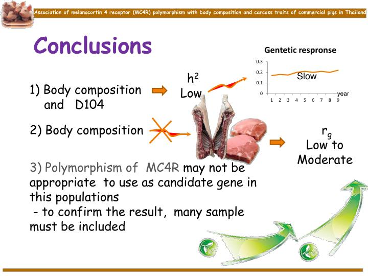 Association of melanocortin 4 receptor (MC4R) polymorphism with body composition and carcass traits of commercial pigs in Thailand