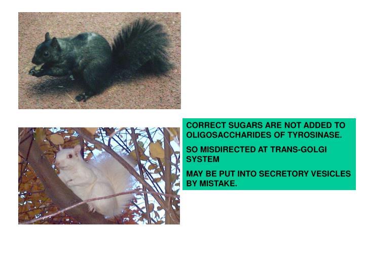 CORRECT SUGARS ARE NOT ADDED TO OLIGOSACCHARIDES OF TYROSINASE.