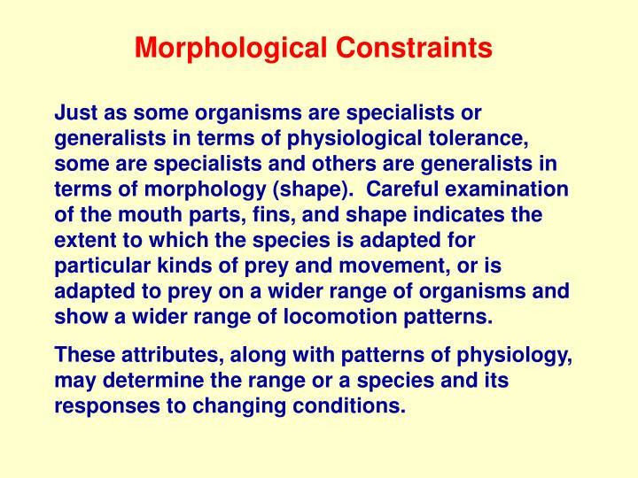 Morphological Constraints